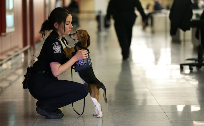US Custom Dogs - Keeping our borders safe